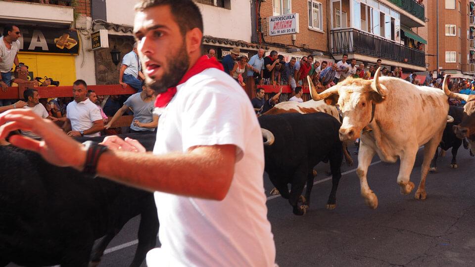 Running the bulls in Madrid