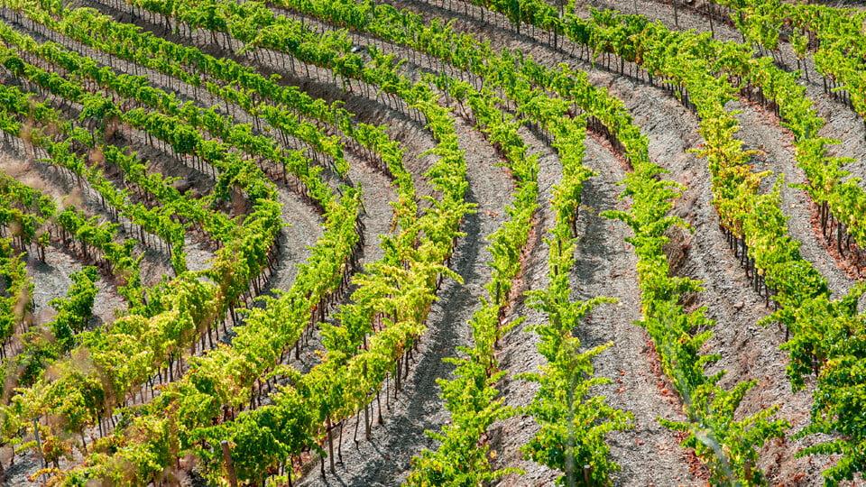 Penedes and Priorat Wine Regions
