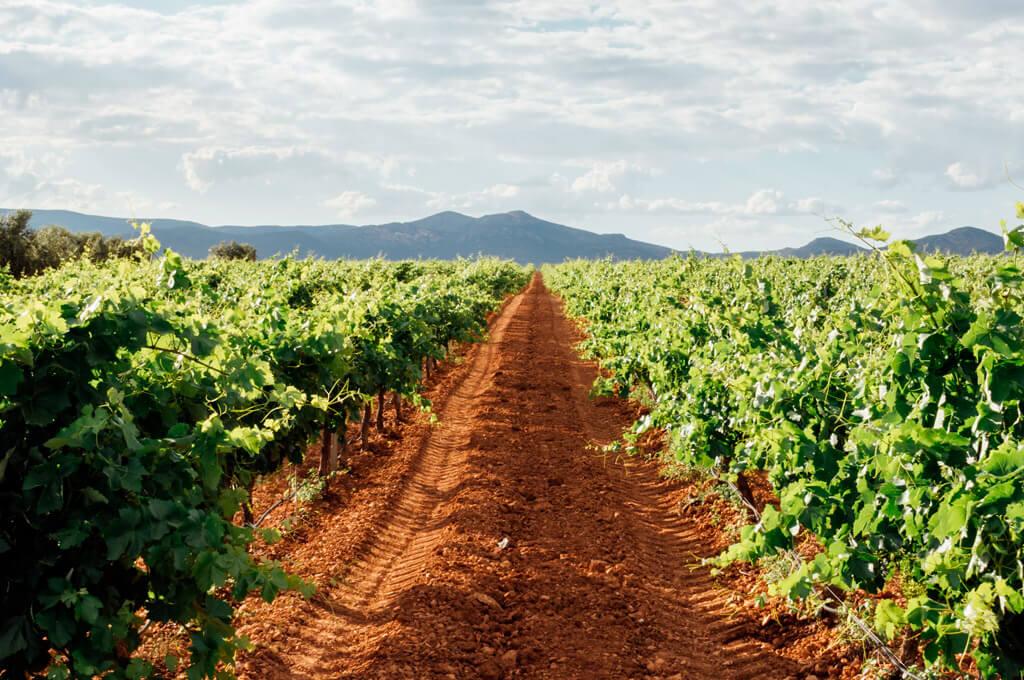 Traditional vineyards of La Rioja
